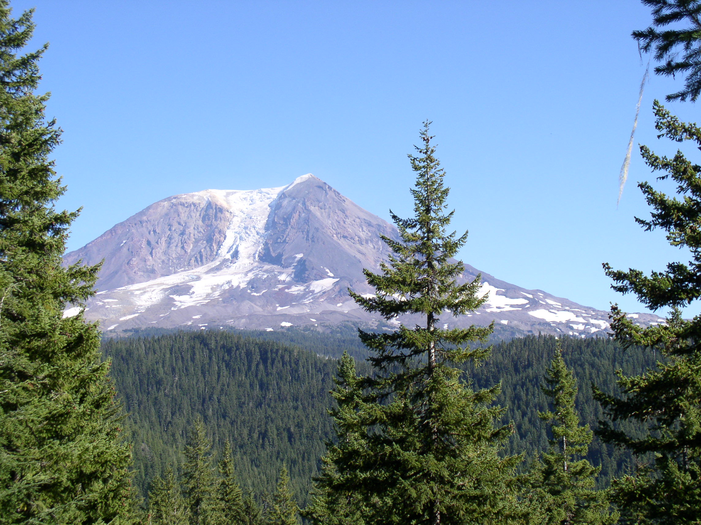 View of Mt. Adams, Cascade Mountains, from near elk camp.