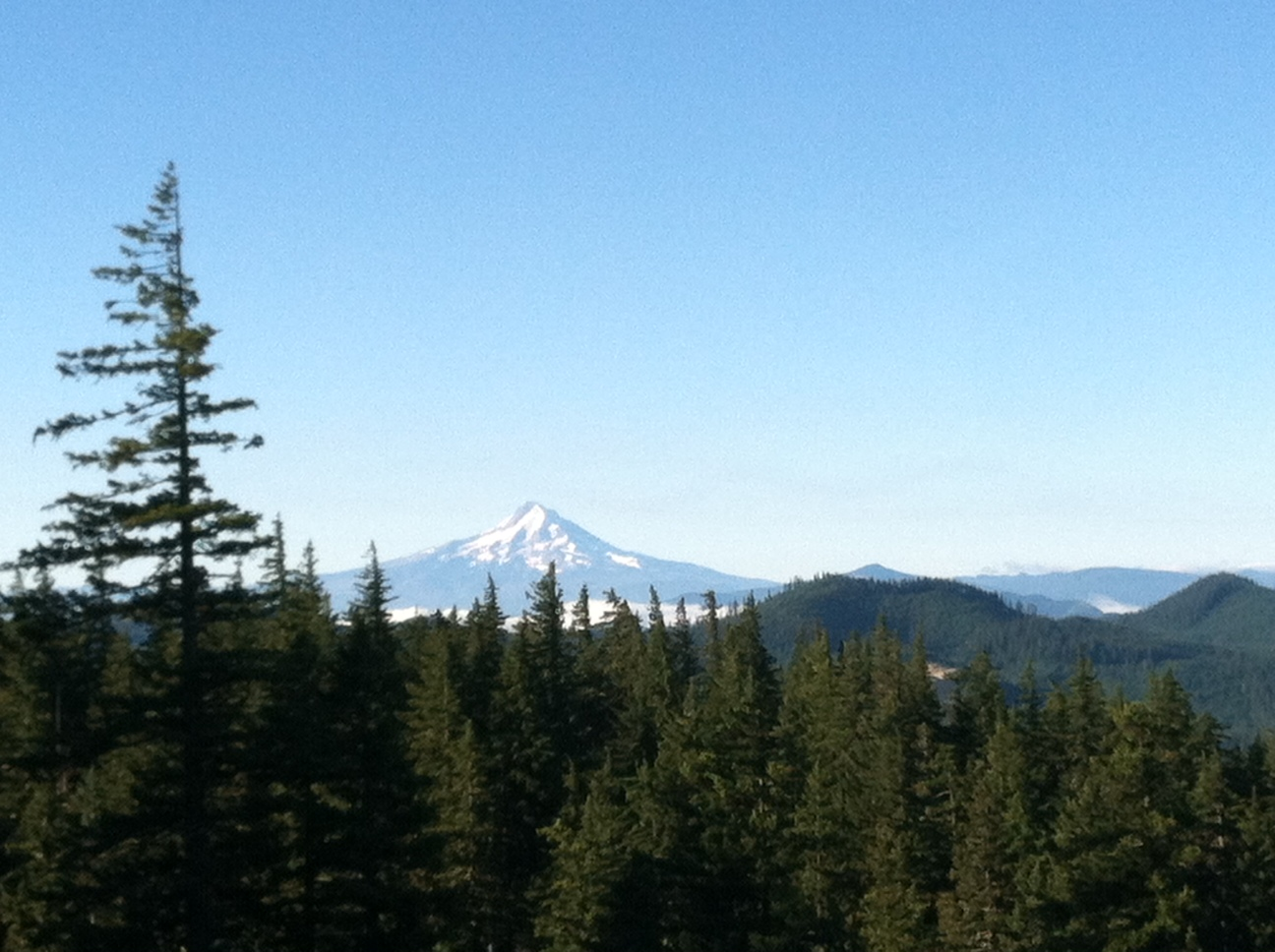 Oregon's Mt. Hood, as seen from the location of my last bear harvest.