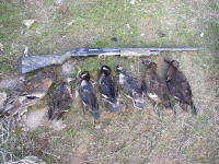 duck hunt Nov 10 2012 010.JPG