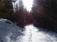 February Cabin 08 014.jpg