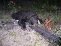 ewa, bear et al 035.JPG