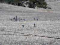 Deer Hunting 06 003.jpg