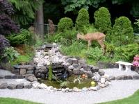 Deer 005.jpg